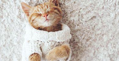 Jak bezpiecznie wyprać sweter